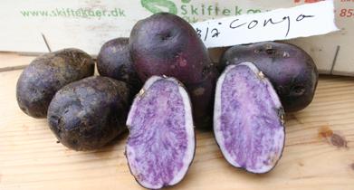blå congo kartofler